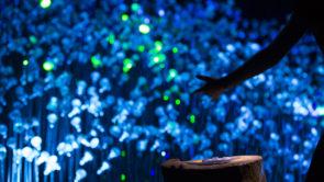 lucioles - insectarium - expérience immersive